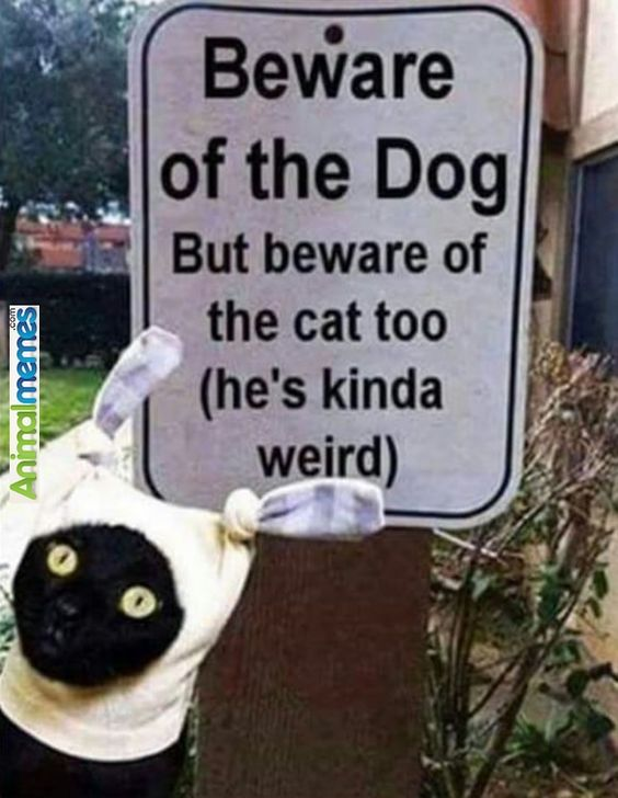 Cat memes You have been warned...