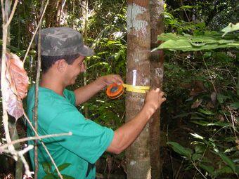 Estudo propõe metodologia para projeto florestal de crédito de carbono | FarolCom