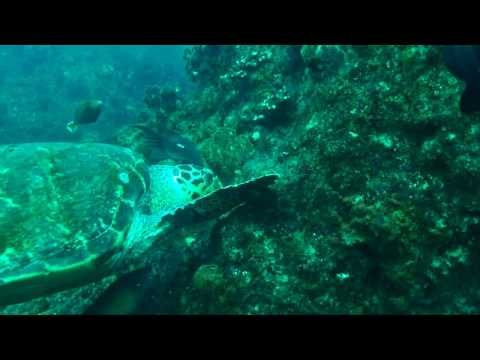 Diving at one of the world's top dive sites - Aliwal Shoal...   @selectclub #aliwalshoal #durban