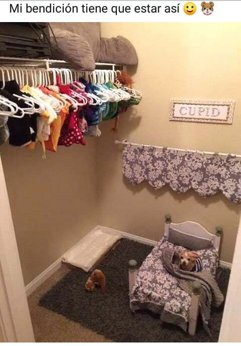 Pin By The Really On Memes Puppy Room Dog Bedroom Dog Decor