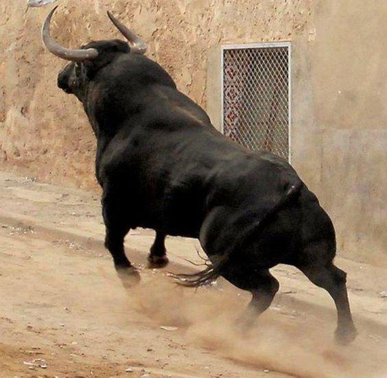 De Corina Garay  ESTO ES BRAVURA..  ESTO ES BELLEZA!!