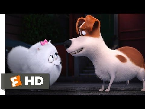 The Secret Life Of Pets You Re In Love Scene 9 10 Movieclips