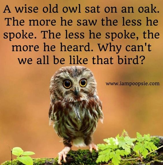 Wise <b>owl</b> <b>quote</b> via www.IamPoopsie.com | My Style | Pinterest: