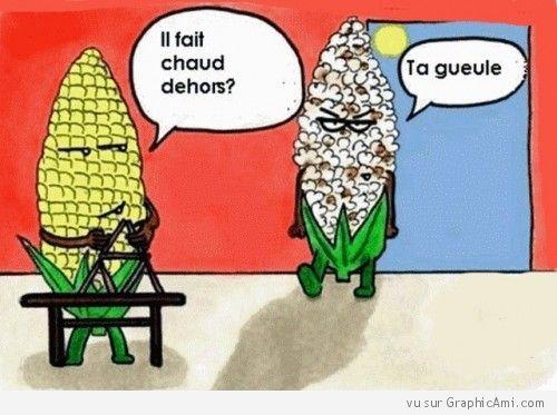 En ces jours caniculaires, une image appropriée où un épis de maïs se moque d'un épis transformé en pop-corn.