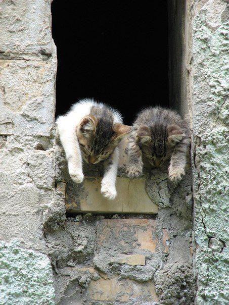 Shhhh.....we're asleep!