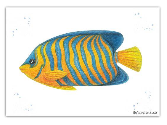 Postkarte Kaiserfisch limitierte Edition von Coramina - Illustration und Design auf DaWanda.com