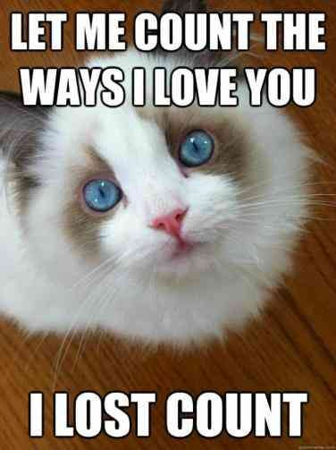 The 40 Best I Love You Memes That Are Cute Funny Romantic All At The Same Time Love You Meme Cute I Love You Funny Cat Memes