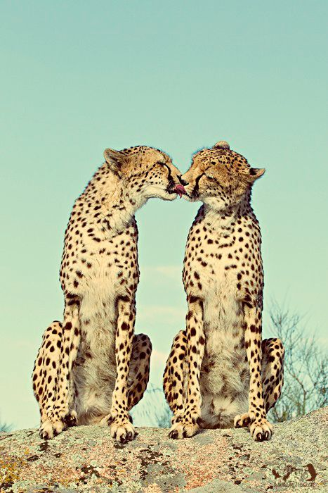 PICS: 22 Adorable Animal Kisses