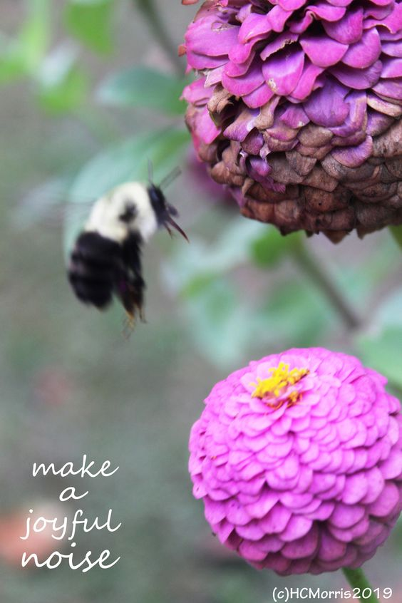 flying bee near flowers with words