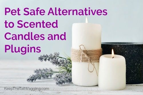 Did You Know That The Toxins Put Out By Scented Candles Plugins And Air Fresheners Are Harmful To Our Pets When You Live Wit Pet Safe Safe Candles Pet Smell