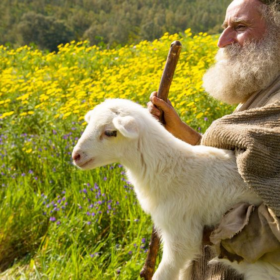 #sundaysheepponderings Pondering today on shepherds. There is so much in the scriptures about shepherds but I'm going to focus on two specific occurrences in the Good News according to …