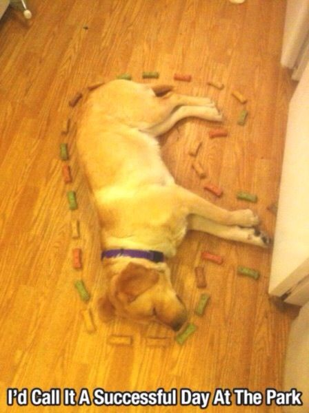 I am making an accusation: It was the Golden Retriever, in the kitchen, with the milk bones. (For all you Clue fans)