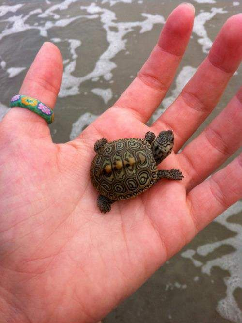 turtles that stay small - Google Search omg im getting a turtle he is going to be calledv oscar