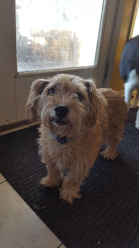 Adopt Terry On Pitbull Terrier Adoption Terrier