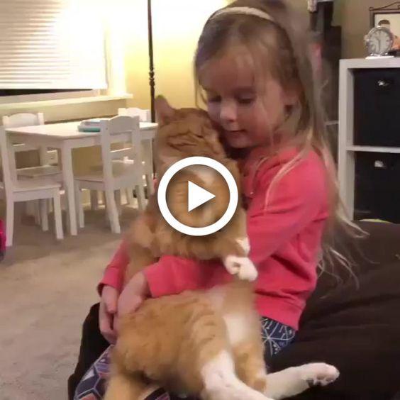 Gata adora o colo de sua melhor amiga