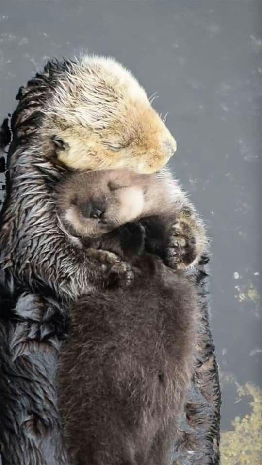 Pin By Floyd Angela Gamboa On Wild Animals Cute Animals Baby Sea Otters Baby Animals
