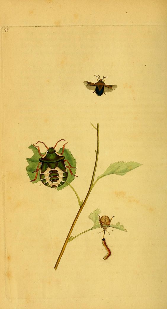 v.3 (1794) - The natural history of British insects : - Biodiversity Heritage Library