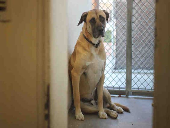 www.PetHarbor.com pet:LACO1.A4979083