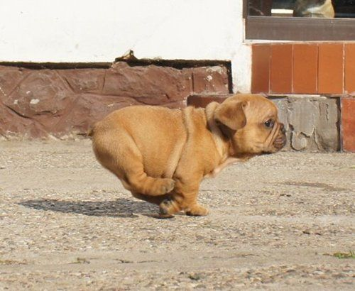Seriously?! How stinkin cute! Snort, I might be w you on this bulldog obsession now.