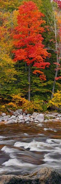✮ White Mountain National Forest -  New Hampshire: Fall Colors, Tree, Autumn Fall, Fine Art Photography, Autumn Colors, Autumn Beauty, Autumn S