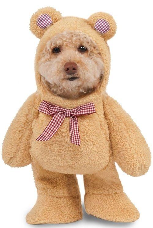 Dog Walking Teddy Bear Fancy Dress Costume Teddy Bear Costume
