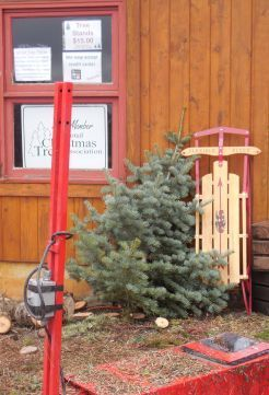 Rusty Gate Tree Farm For Christmas Trees In Harrison Idaho Christmas Tree Tree Farms Tree