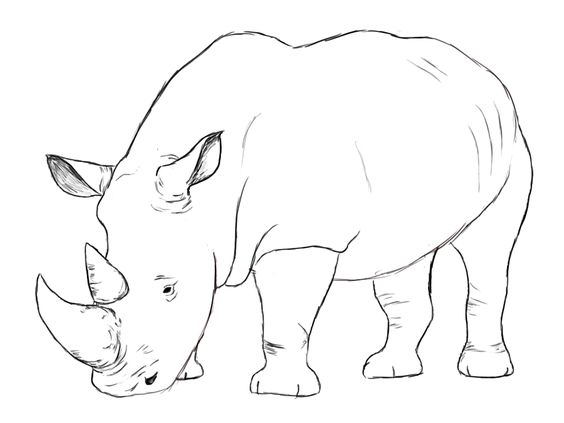 How to draw a rhino rhinoceros tutorials and how to draw for Easy drawings that look hard