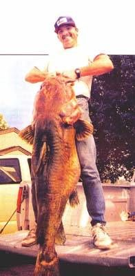 Flathead catfish 123 lbs kansas big fish pinterest for Kansas fish records