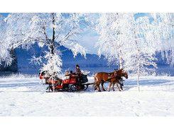 Pferdeschlittenfahrten Schernthaner Anni : Zelle am See, Kaprun, Salzburg, Austria