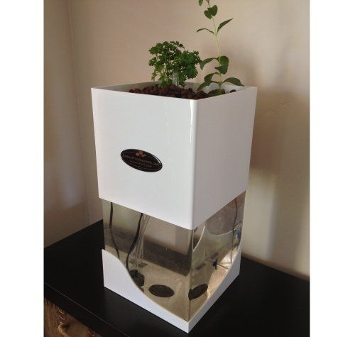 Aquaponics system indoor herbs and aquaponics on pinterest for Fish tank herb garden