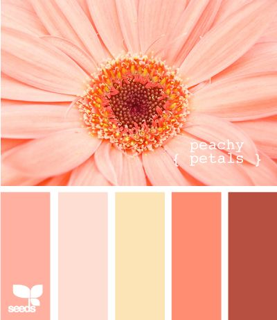Neon hues floral arrangements paint colors and design - Peach and red combination ...