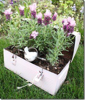 What a great way to rehab those old lunch pails no longer being used.