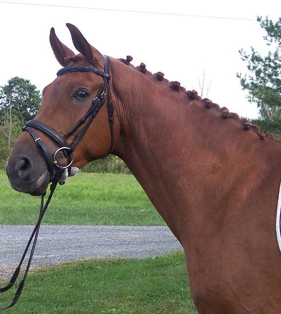 Rhinelander Horse