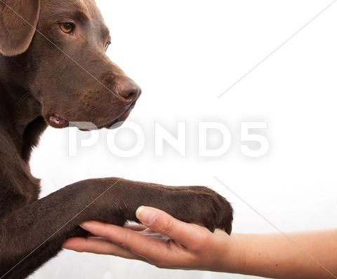 Dog Paw And Human Hand Doing A Handshake Stock Photos Ad Human