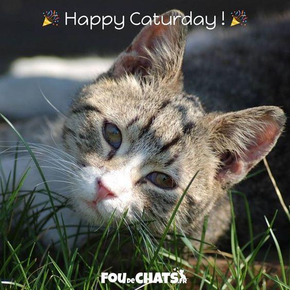 Happy Caturday! Bon Chatmedi  ! .  https://foudechats.fr/   Le chemin le plus sûr vers le bonheur. .  Nous rendons heureux tous les amoureux des #chats avec des #cadeaux originaux.  . #chat #chaton #amoureuxdeschats #jaimeleschats #caturday
