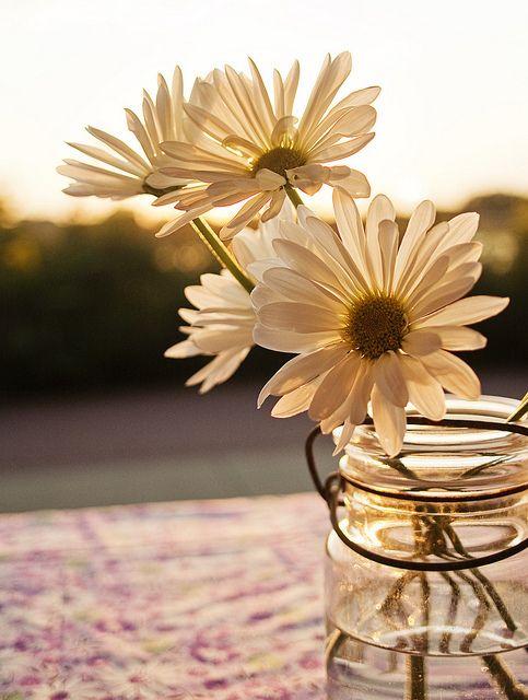 daises and mason jars <3