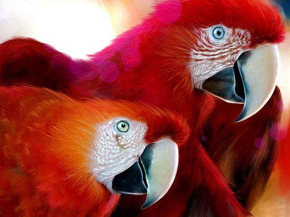 araras vermelhas Brasil