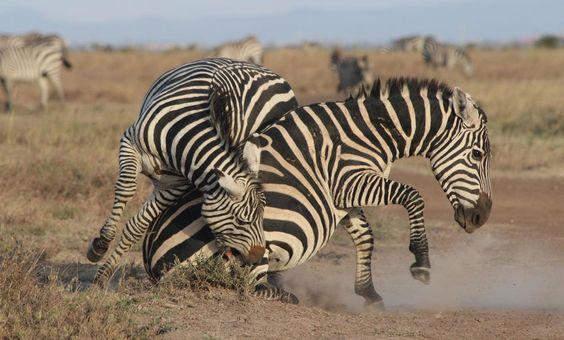 Taken at Nairobi National Park