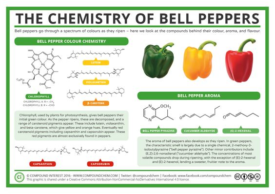 Bell peppers come in a range of hues, from fresh greens to vibrant reds. Chemical pigments are behind these, but what changes to cause peppers to travel through this spectrum of colours? Here we ta…