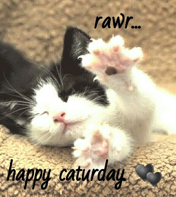 Happy Caturday