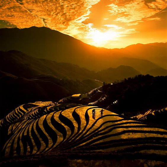 Wherever that is, I want to go there now.: Himachal Pradesh, Favorite Places Spaces, Beautiful Places, Rice Terraces, Sunrise Sunset, Amazing Places, Rice Fields, Golden Sunset