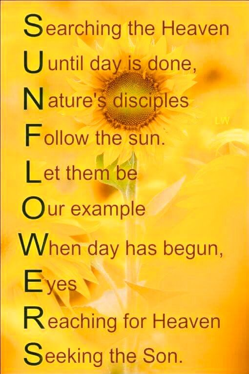 Sunflower Message Sunflower Quotes Quotes Sayings