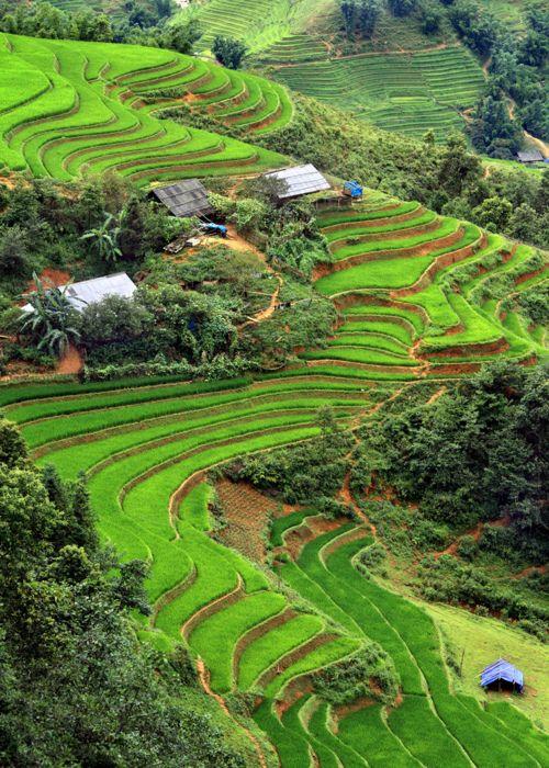 Beautiful green terraced hills in 2009