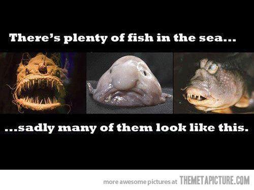 Plenty of fish in the sea…