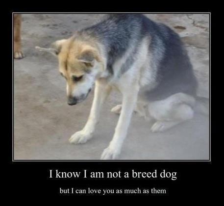 los seres vivos mas hermosos y fieles del mundo!! los perritos mestizos!!