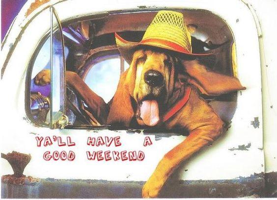 Bloodhound domain gang myspace.com