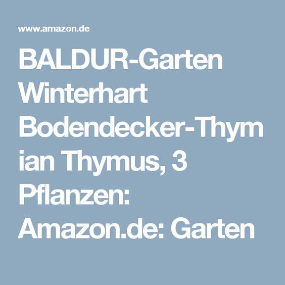 Baldur-garten Winterhart Bodendecker-thymian Thymus, 3 Pflanzen ... Brombeeren Pflanzen Und Schneiden Pflegetipps Fur Hobby Gartner
