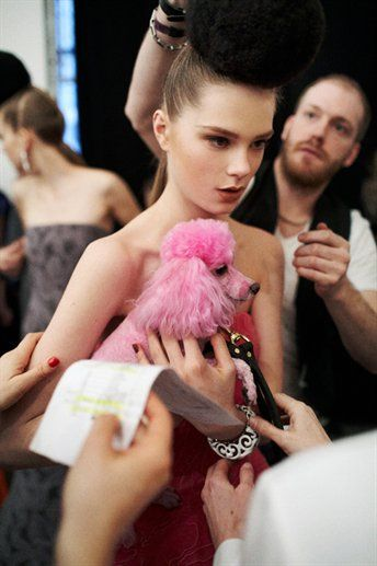 Poodle chic... pink is the new black
