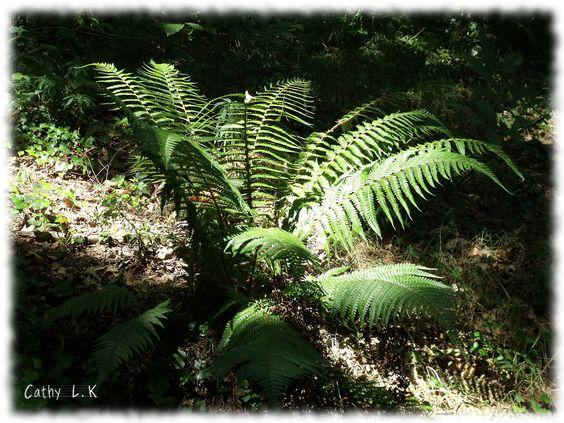 balade en forêt2