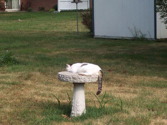 Jughead on the birdbath.